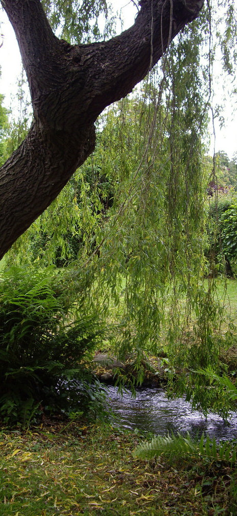 Down in the Willow Garden - Sing Out!