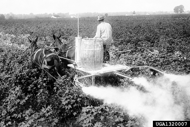Mule-driven cart being used in 1919 in Scott, Mississippi, to dust for boll weevils - photo by B.R. Coad